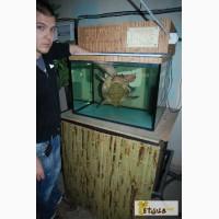 Террариум где живет крокодил, водяной варан или черепаха