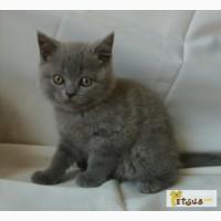 Роскошный голубой плюшевый мишка Теddy Bear 2 мес (родился 7 марта), Киев