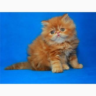 Персик. Яркий оранжевый мальчик