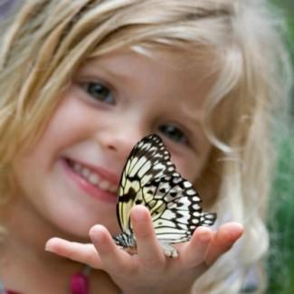 Живые бабочки подарить невесте, жене, любимой, девушке, дочери, подруге
