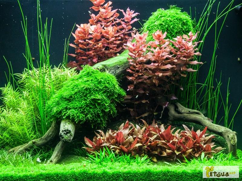 Фото 3/20. Аквариумные растения