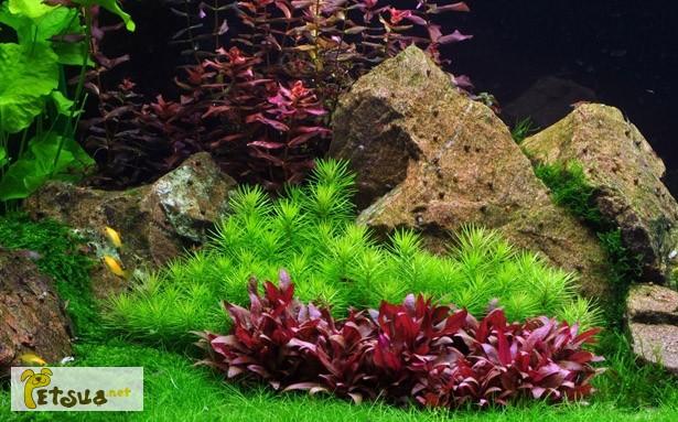 Фото 1/20. Аквариумные растения