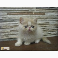 ������ ��� �� ��������� Fluffycat