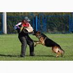 Выгул и передержка собак