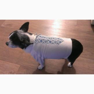 Вышиванка для маленькой собаки