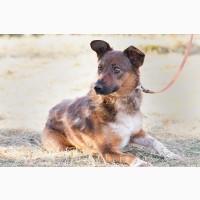 Весточка - небольшая собачка