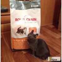 Оригинальные корма для животных фирмы Royal Canin!