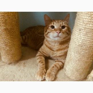 Солнечный ласковый котик