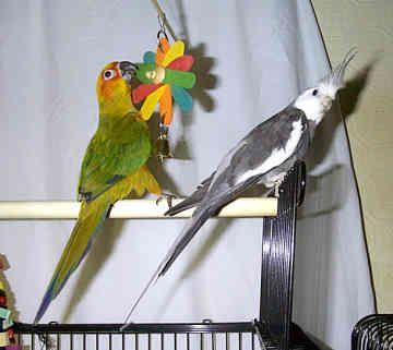 Фото 2/4. Приму за символическую сумму или в дар среднего или большого попугайчика
