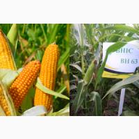 Насіння кукурудзи ВН 63 (Семена кукурузы ВН 63 (ФАО 280) ВНИС )