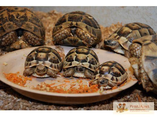 Фото 1/1. Сухопутные и водяные черепахи
