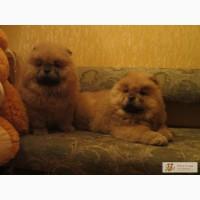 Продажа щенков и собак купить щенка или взрослую собаку
