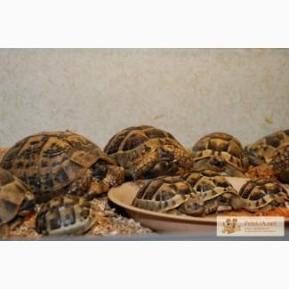 Продаём черепах разных видов