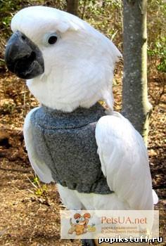 Как сделать воротник для попугаев 877