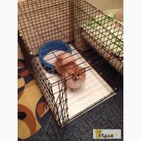 Клетка для собак 2-двери 78х55х62 см с пластиковым поддоном