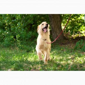 Отдам в хорошие руки молодую собаку Тайри