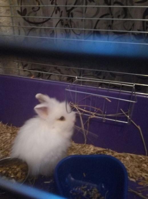 Фото 1/1. Отдам белого кролика с клеткой в добрые руки