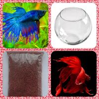 Эксклюзивный подарок на день рождения-аквариум шарообразный (2л) с рыбкой Петушок