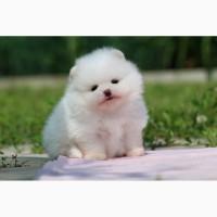 Шикарный белый малыш