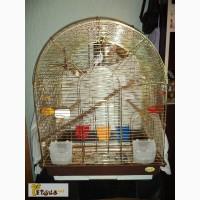 Продам большую золотую клетку с парой волнистых попугаев