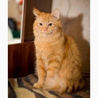 Теплое нежное солнышко, молодой домашний котик Фима в добрые руки