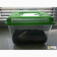 Контейнер (террариум) для земноводных