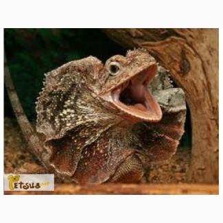 В продаже экзотические рептилии