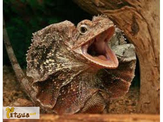 Фото 1/1. В продаже экзотические рептилии