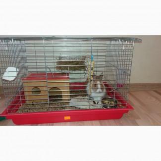 Віддам декоративного кролика з кліткою та аксесуарами 4 міс