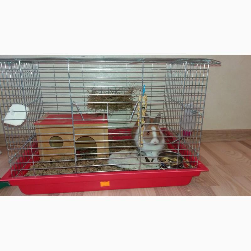 Фото 1/2. Віддам декоративного кролика з кліткою та аксесуарами 4 міс