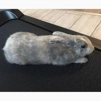 Отдам кролика в хорошие руки