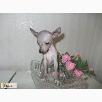 Крошка на ладошку
