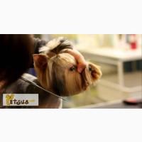 Обучение стрижке собак в Киеве