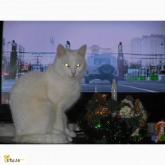 Jessi примет приглашение кота турецкой ангоры