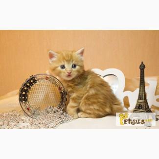 Высокопородные котята-рысята породы курильский бобтейл из питомника!