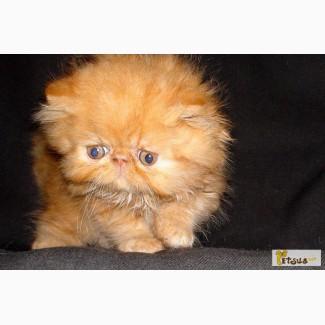 Министерства Внутренних персидские экстремальные коты фото известно, карбюратор бензинового