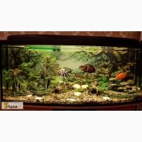 Продам панорамный аквариум с овальным передним стеклом в отличном состоянии