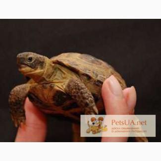 Ухопутная черепаха,водяная черепаха, ручная черепаха - разные виды