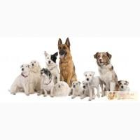 Госиница для собак
