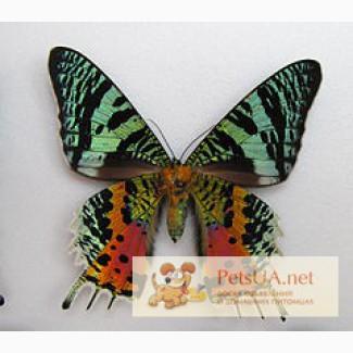 Живые бабочки, настоящие тропические, круглый год