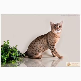 Ласковые игривые котята.