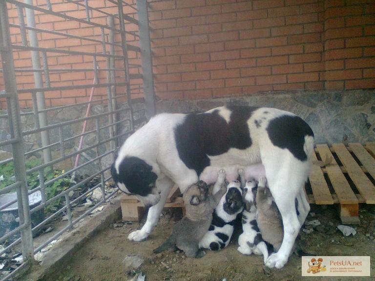 щенки в запорожье