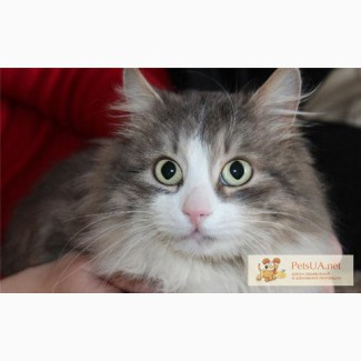 Томми - супер-кот!!!