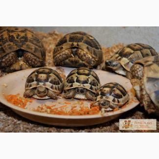 Сухопутные и водяные черепашки - полностью ручные разного ра