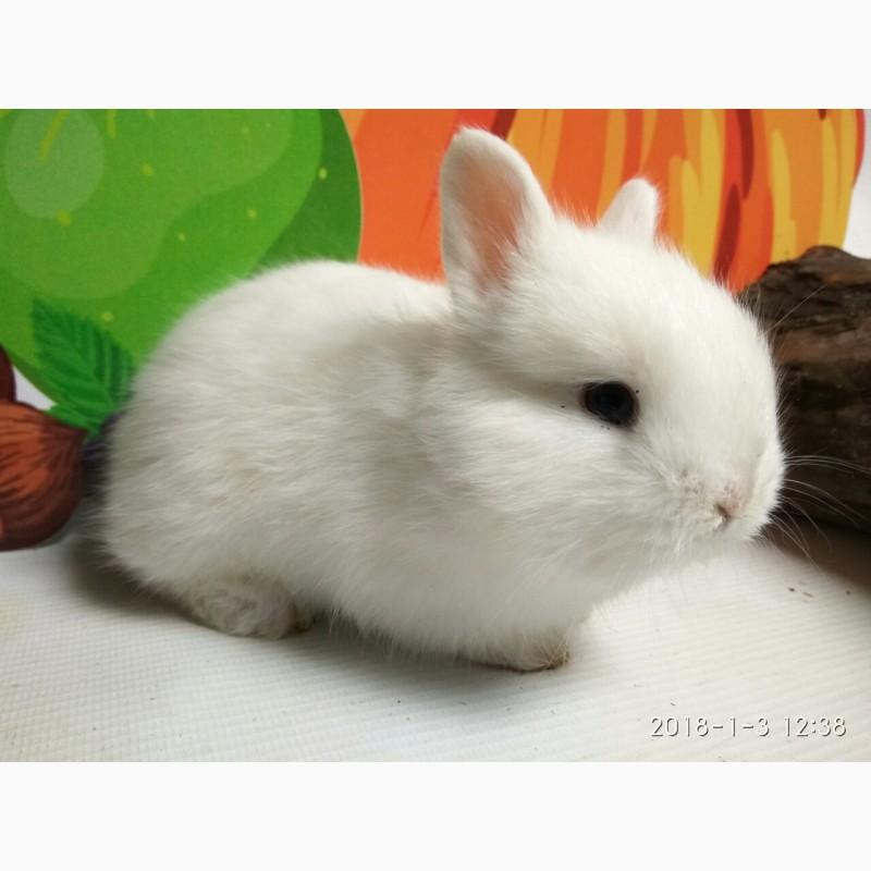 Фото 1/5. Наши крольчата