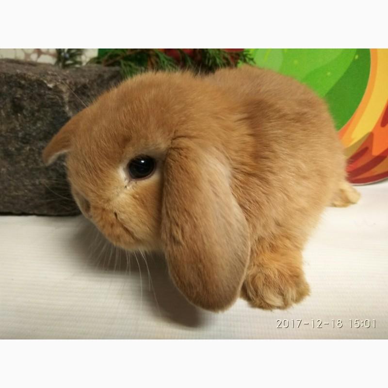 Фото 2/5. Наши крольчата