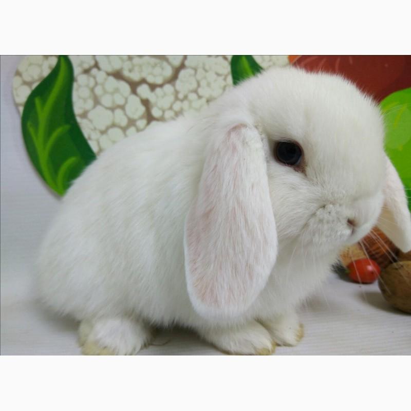 Фото 3/5. Наши крольчата