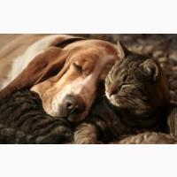 Усыпление(эвтаназия) ветеринарная помощь Харьков