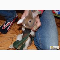 Продаётся костюм для выгула кроликов