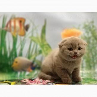Котята вислоухие. Фото и плюш - настоящие